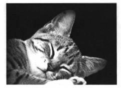 catsleep.jpg